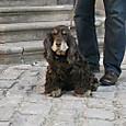 バンベルクの犬
